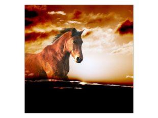Vzpomínka na koně