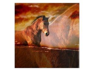 Kůň v detailu