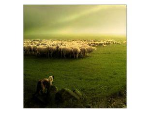 Stádo ovcí na louce