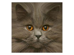 Šedá kočka s hnědýma očima