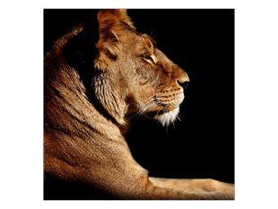 Hrdost lva