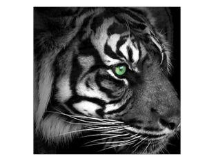 Zelenooký tygr