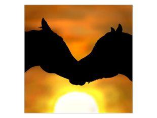 Dva koňě při západu slunce