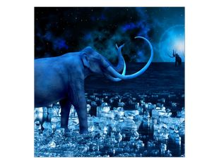 Slon v měsíční záři
