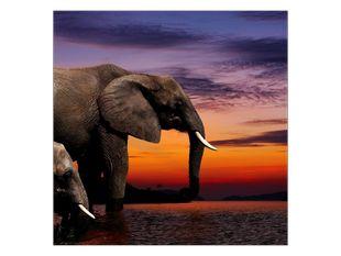 Sloni u řeky