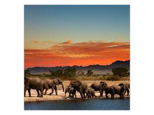 Sloní stádo u řeky
