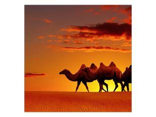 Velbloudi na poušti při západu slunce