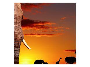 Sloni v západu slunce
