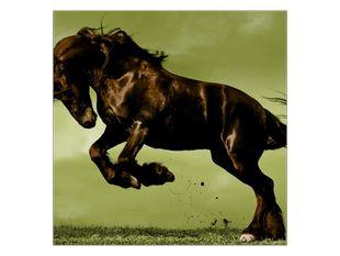 Hnědý kůň ve skoku
