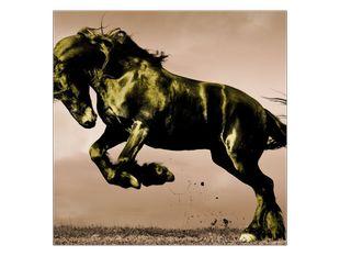 Černý kůň v poskoku