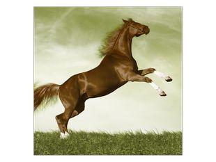 Hnědý kůň na trávě