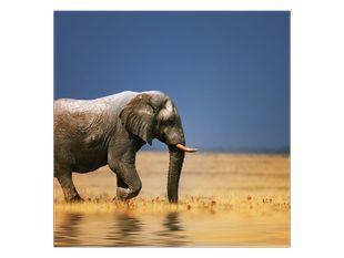 Slon v savaně
