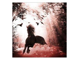 Magický kůň