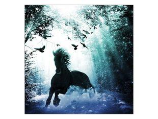 Kůň v řece