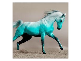 Bílý kůň ve skoku