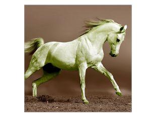 Bílý kůň v poskoku
