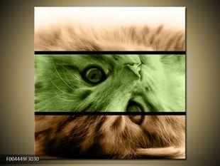 Hravý pohled koťátka