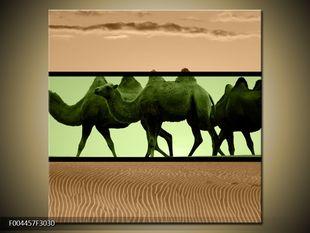 Velbloudi na poušti
