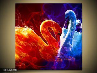 Kouřové labutě dvoubarevně