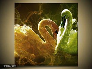 Šedé a bílé labutě na jezeře