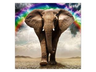 Slon a duha