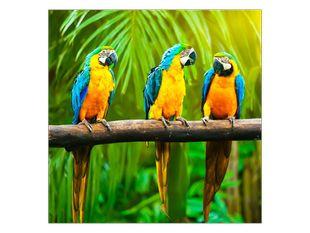Rozhovor tří papoušků