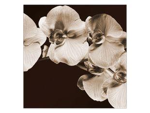 Vzpomínka na orchidej