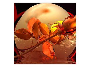 Žhavá růže