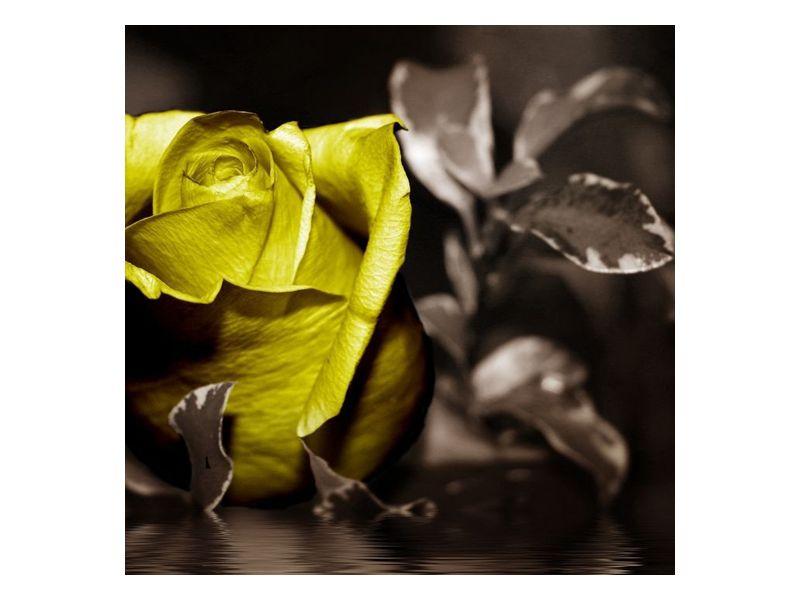 Žlutá růže s lístky