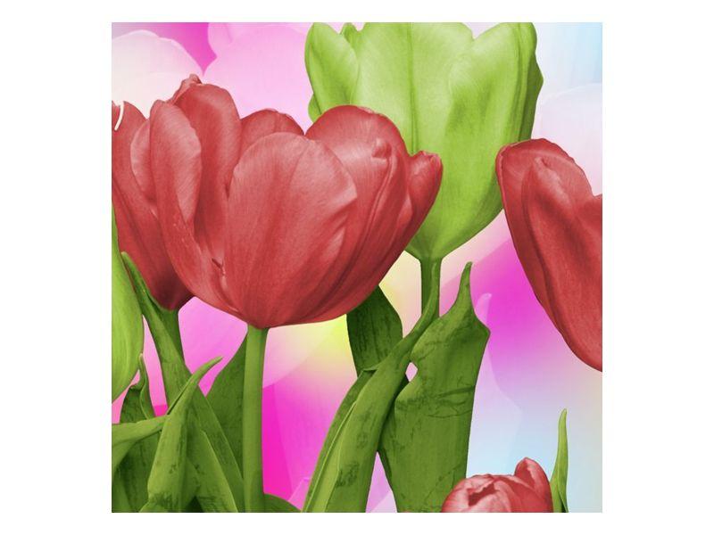 Pohled na tulipány