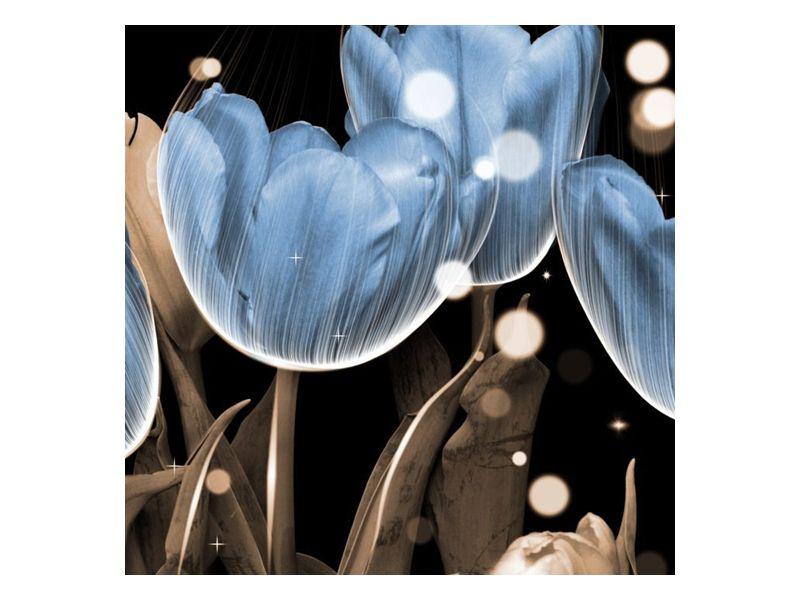 Modré tulipány