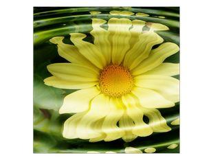 Květina odraz ve vodě
