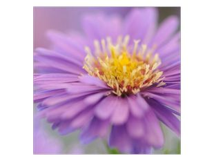 Luční fialové kvítí