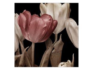 Myšlenka na tulipán