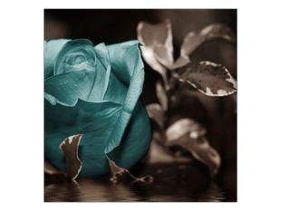 Poezie v růži