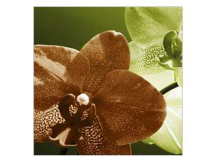 Hnědá kropenatá orchidej