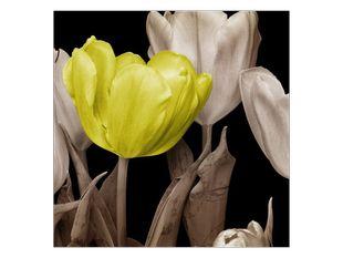 Žlutý tulipán květ