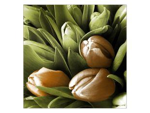 Tulipánová senzace