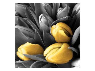 Tulipány barvy slunce
