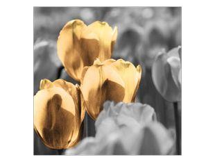 Tulipány v šeru