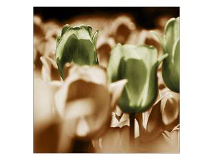 Tulipány v davu