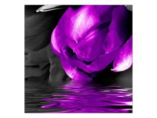Žíznivý tulipán