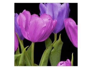 Pastelové barvy tulipánů