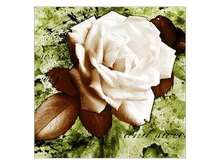 Bílá růže s lístky