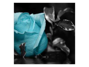Modré poupě růže
