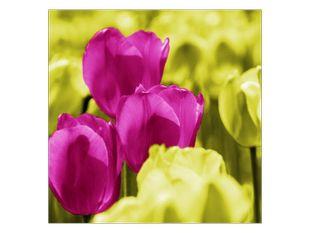 Veselý tulipánový den