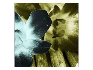 Květiny na dřevě
