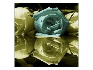 Vadnoucí růže