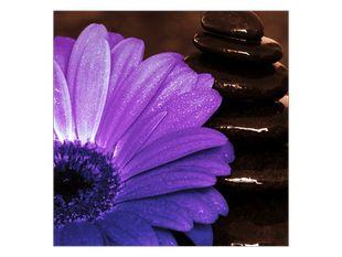 Zapomenutý květ