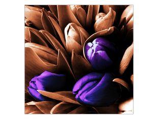 Tulipány v modré